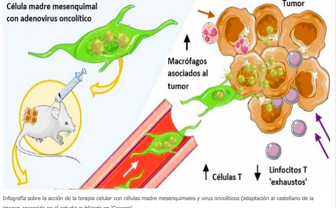Avances en inmunoterapia celular contra el crecimiento de tumores